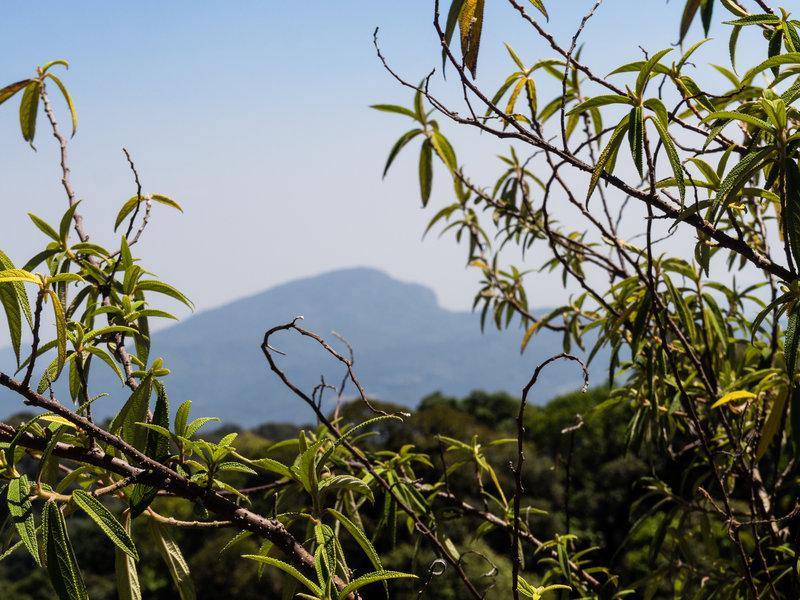 Doi Inthanon, the highest point in Thailand, peeking through the foliage.