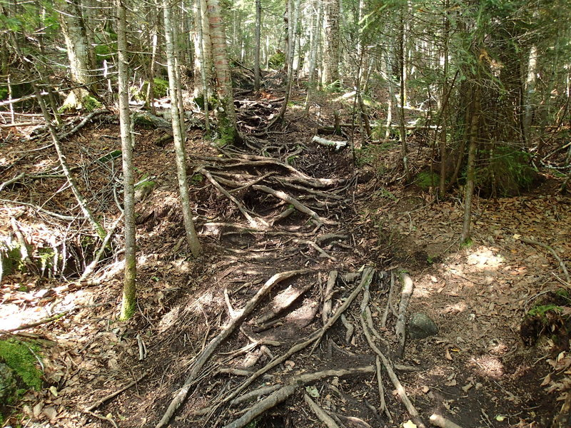 Unmaintained trail to Street and Nye.