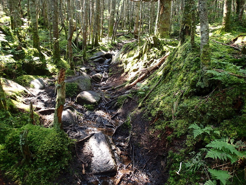 Trail above 3500 feet is rough but lined with green moss. Beautiful