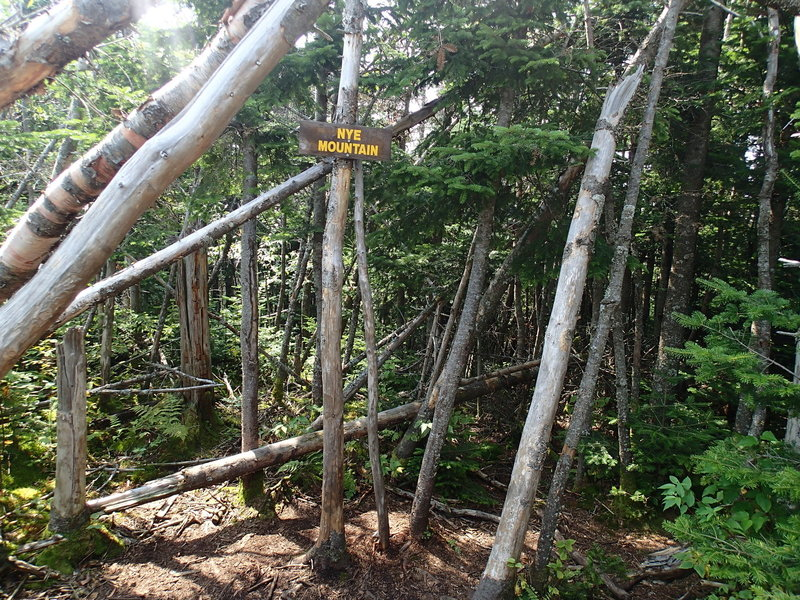 Summit of Nye Mountain. No views.