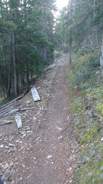 Sweet singletrack - Great Flume Trail.