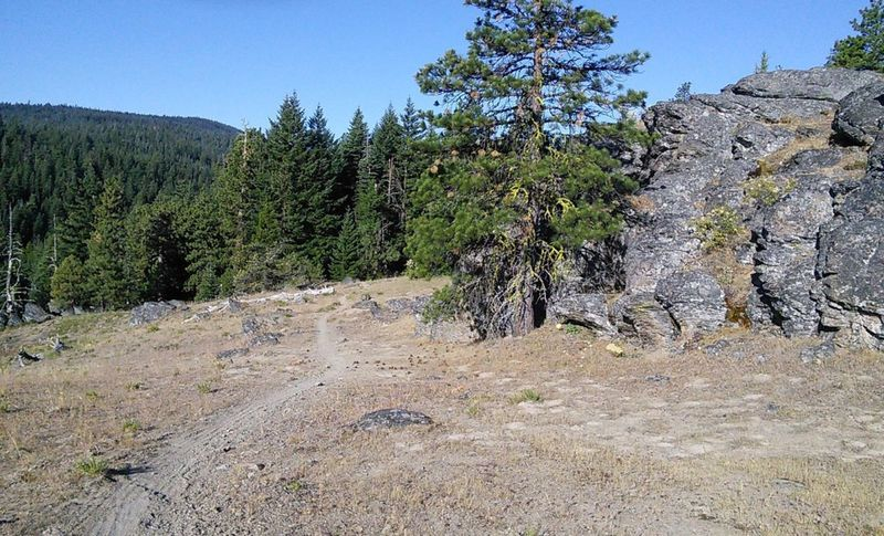 The trail varies from open areas with great views to deep forest creek crossings.