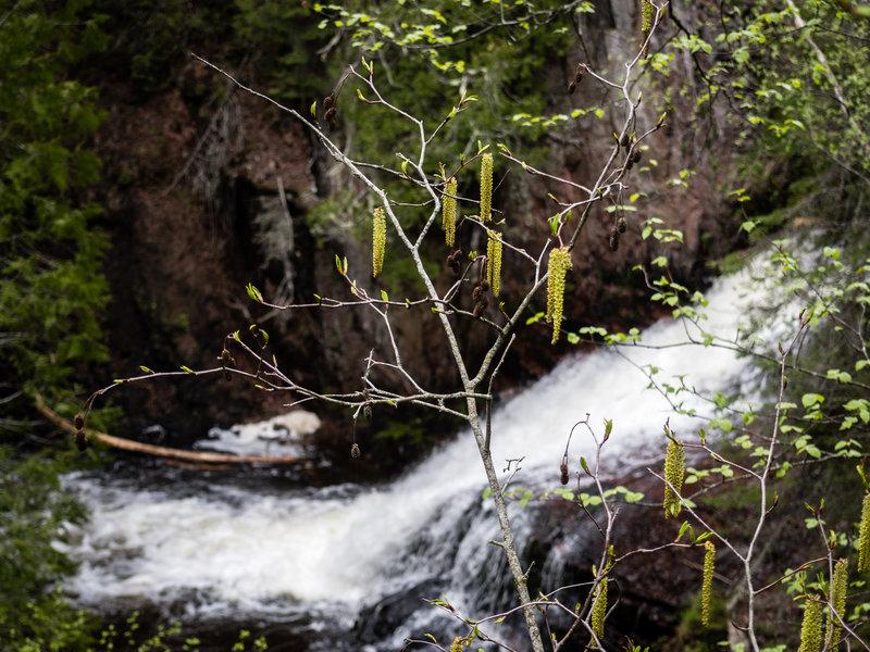 Kadunce River.