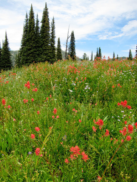Meadow above Boulder Lake in Payette National Forest.