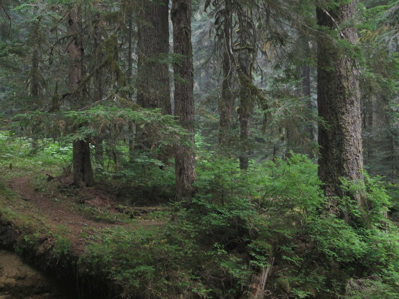 Dense forest enriched by generous moisture.