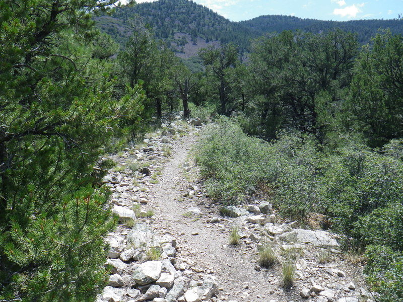Changing scenery and trail as you drop in elevation.