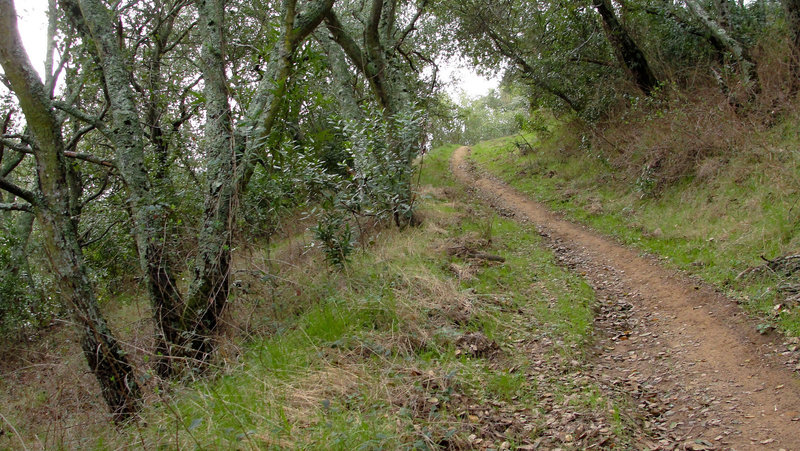 Mount Diablo State Park Oyster Point Trail.