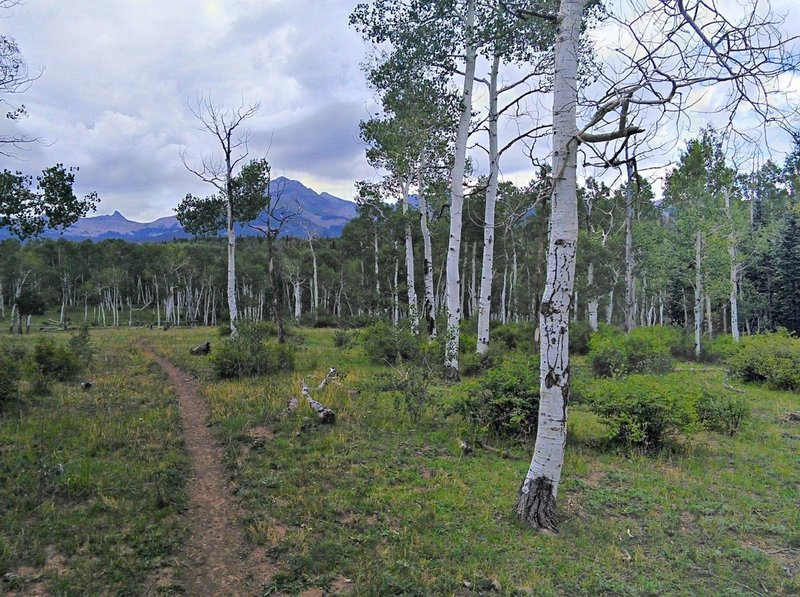 Sparse aspens along the Box Canyon Trail.
