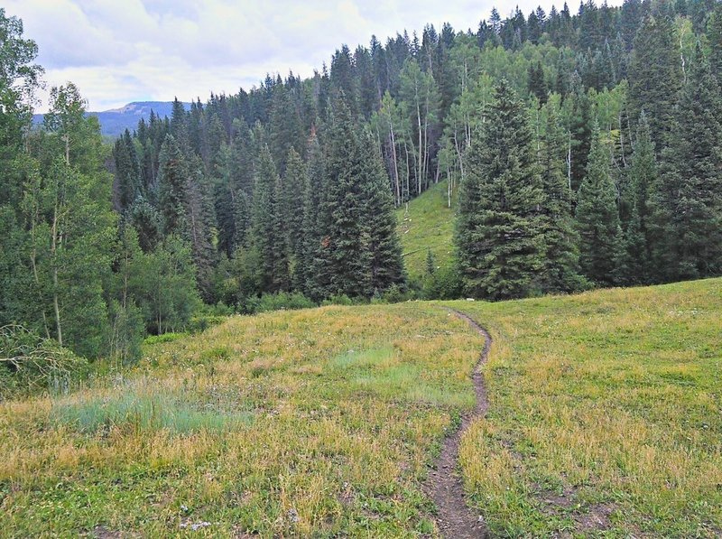 Descending through meadow in Deer Lick Creek drainage.