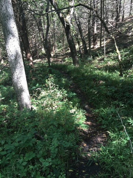 More vegetation on the trail.