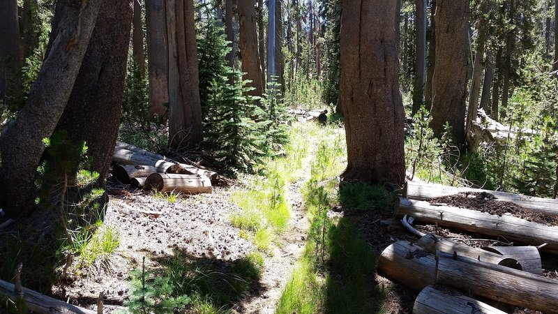 Upper Garfield Trail to South Fork Camground.