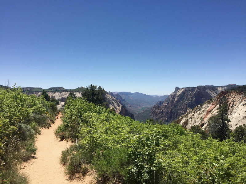 The trail leading up to Observation Point