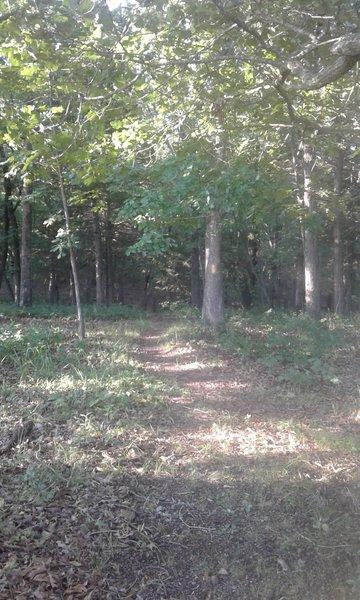 Cedar Bluff Trail