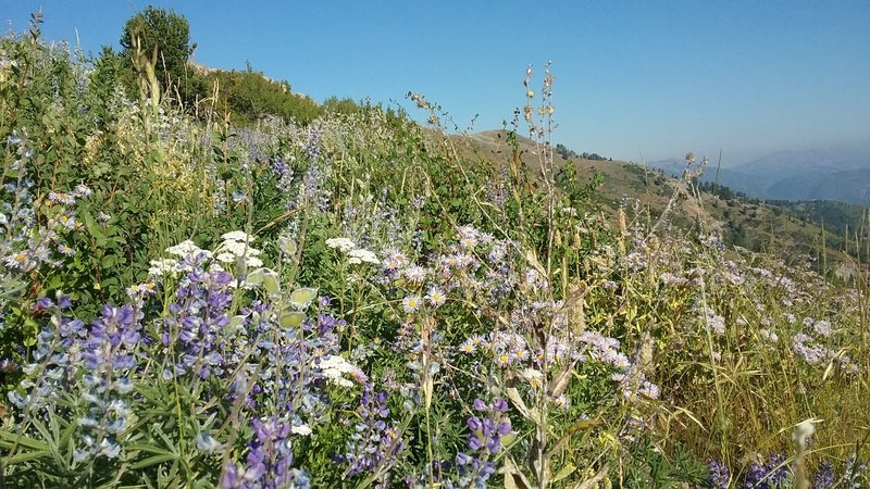 Wildflowers hanging on in spots in early September