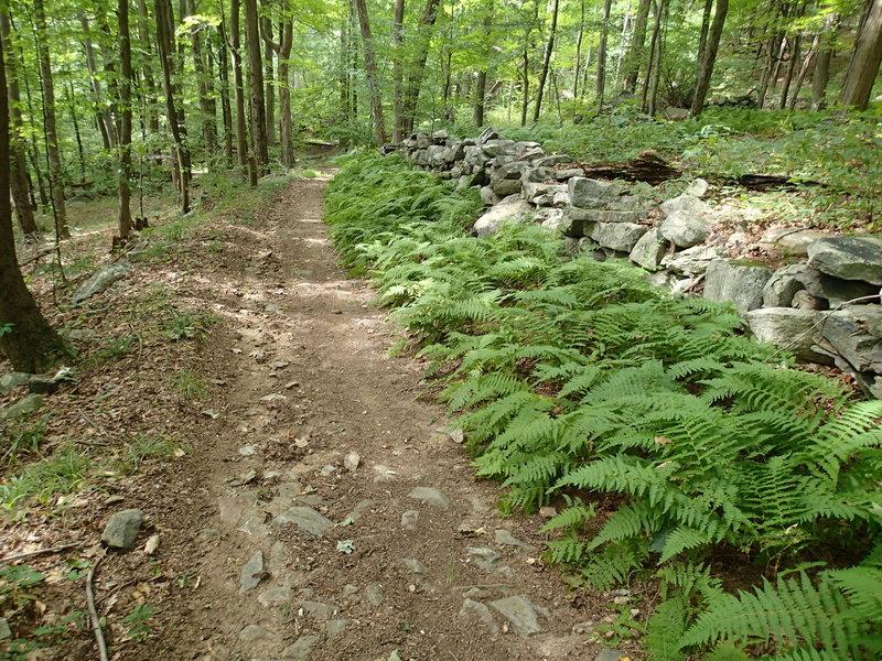 Roaring Brook Trail