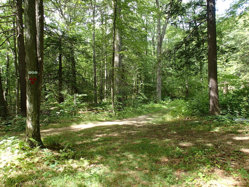 Roaring Brook/Pasture Loop trail junction