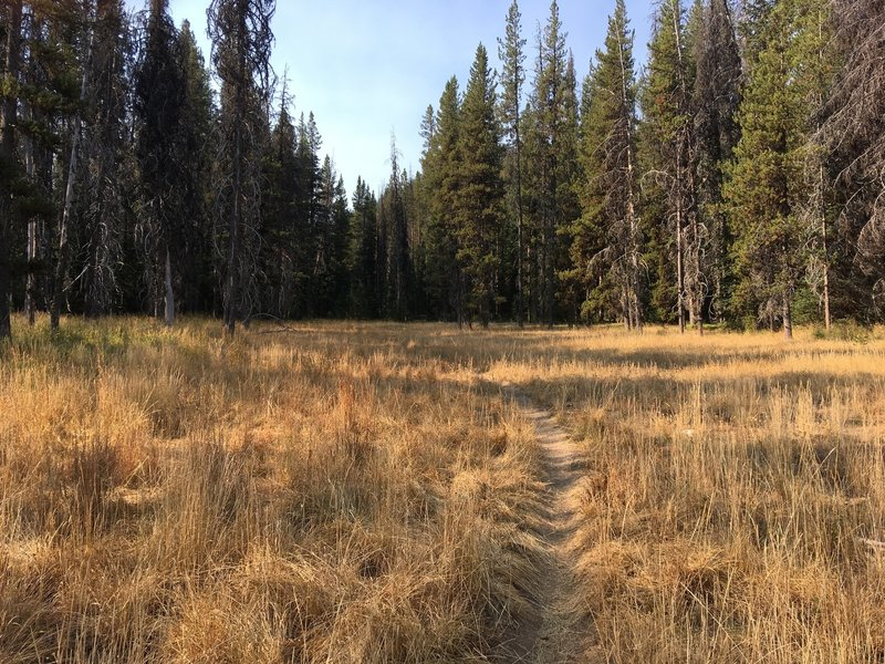 The Pete Creek Trail runs through several meadows before the climbing starts.