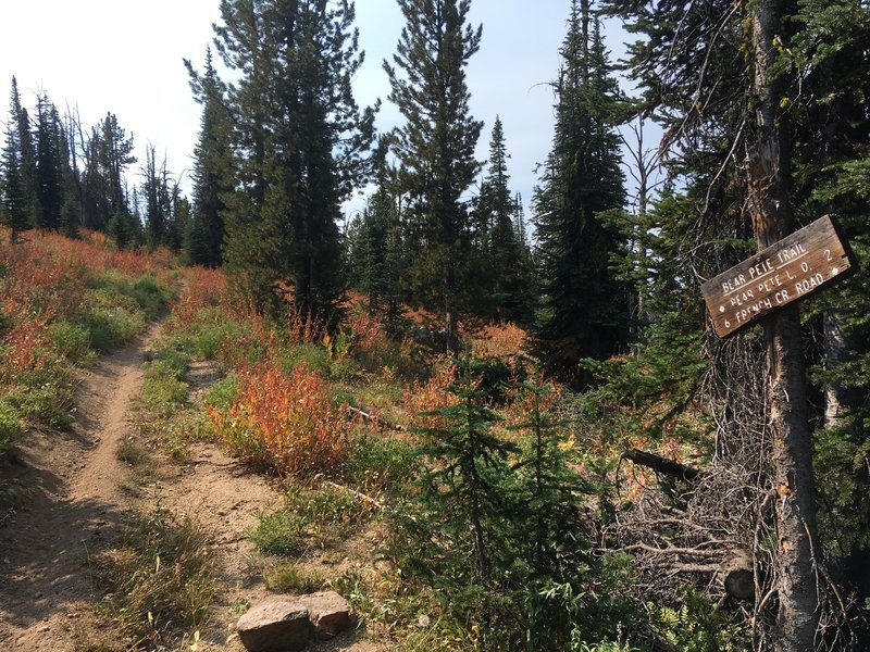 Pete Creek and Bear Pete Trail junction. The most scenic part of the course is just ahead.