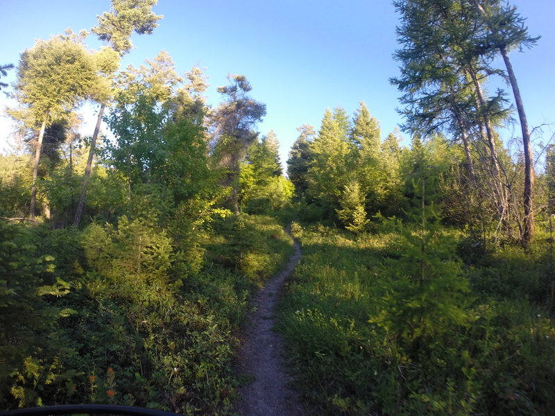 After a steep climb, the trail will level off with some isolated singletrack.