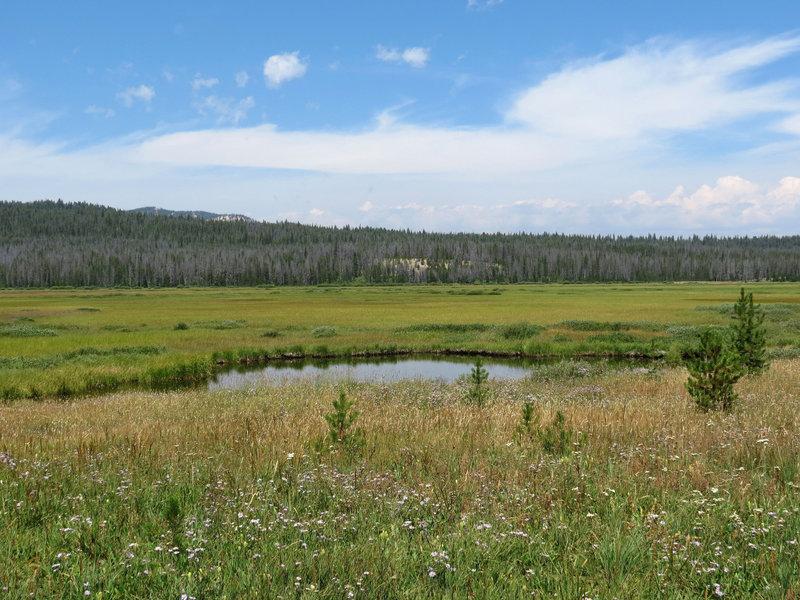 Elk Meadow.