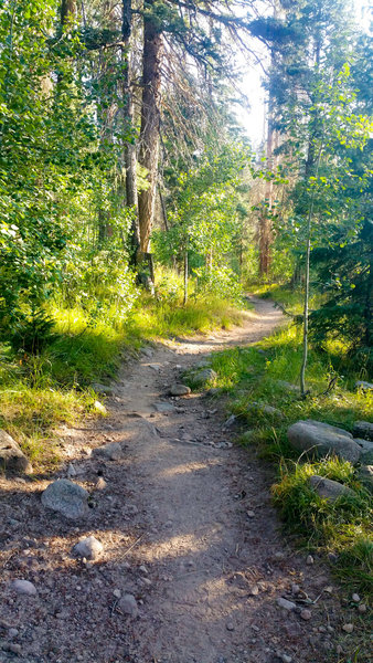 Four Mile Falls Trailhead