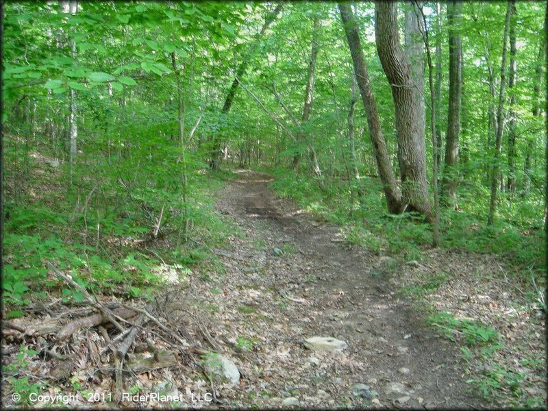 Typical forest along the Pachaug Multi-Use Trail.