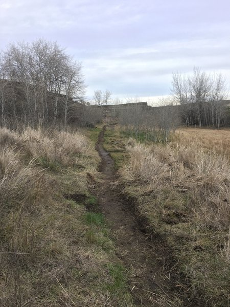 More of the newly made singletrack trail. Just beyond here, the singletrack will cross an old grass covered jeep trail. Look to your right down the road for the new singletrack trail continuing on the opposite side.