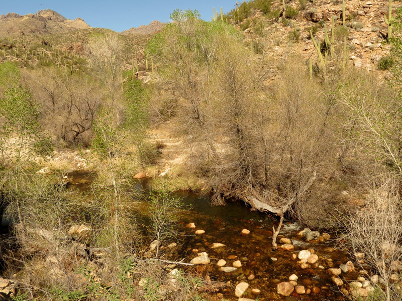 Sabino Creek.