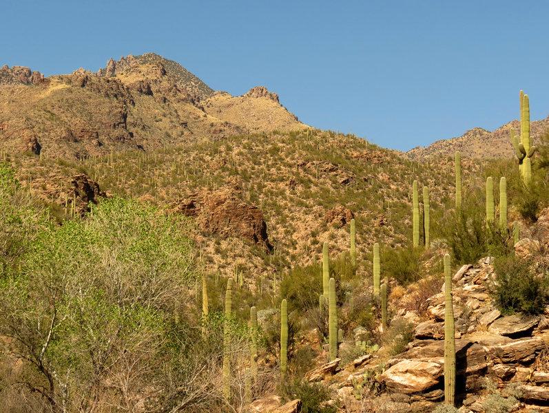 Sabino Canyon.