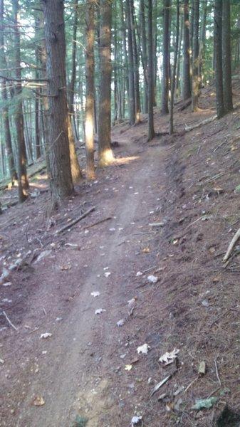 Nice machine-built trail!