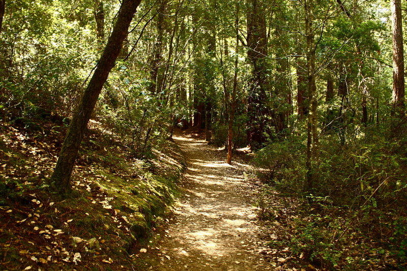 More Sequoia Trail.