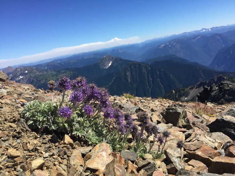 Alpine flowers on Outram, with wildfire smoke in background