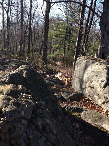 Typical rocky sections on Little Mountain, as the trail splits the difference between the outcroppings.