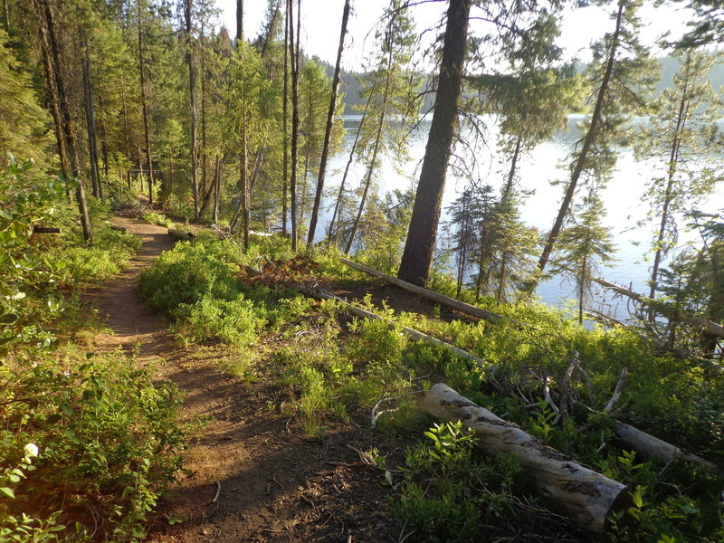 The Sagehen Reservoir Trail skirts the lake almost the entire way.
