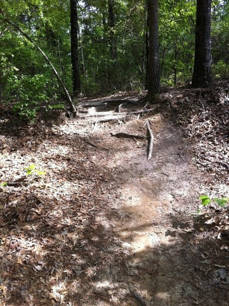 Some rooty sections on the trail