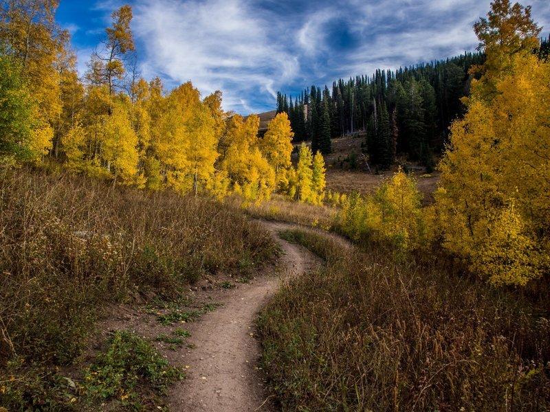 Smooth singletrack on Action Jackson through aspen groves in the fall at Grand Targhee Resort. Photo: Dana Ramos - Instagram: @dnasince1979