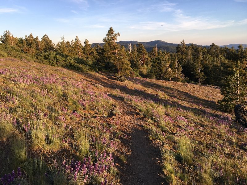 Meadow near trailhead