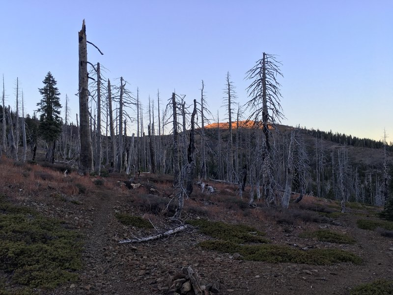 Burned out forest and Snow Mountain East in background.