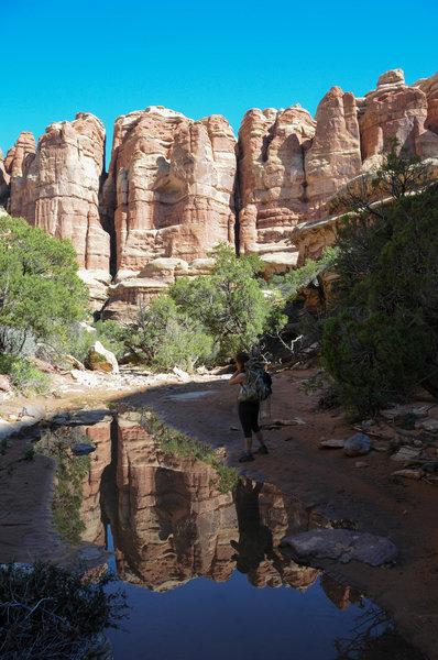 Enjoying the beautiful views in Elephant Canyon