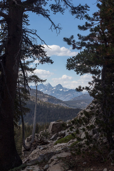 Snowy mountains through the trees on Emerald Lake Trail.