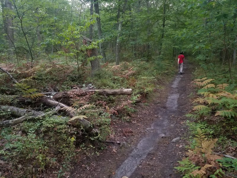 Path in Webster Conservation Area