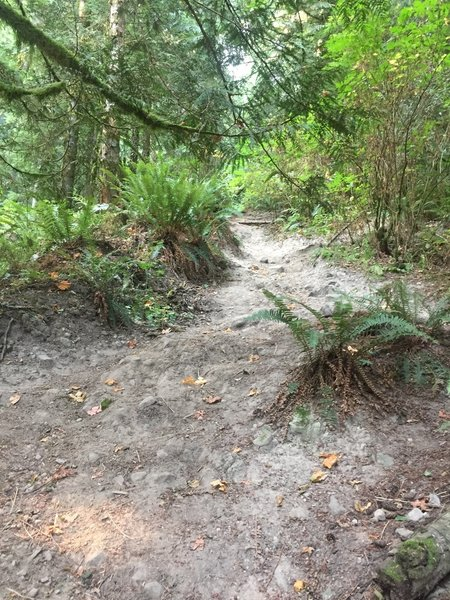 Typical section of the trail. Loose dirt, roots, and rocks.