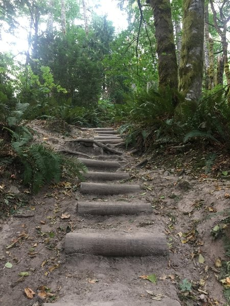 While the trail is marked as 'not well maintained' some sections do have stairs.