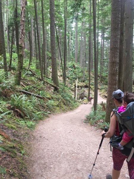 West Tiger #3 is a wide, well-maintained trail that is good for coming back down after the Cable Line.