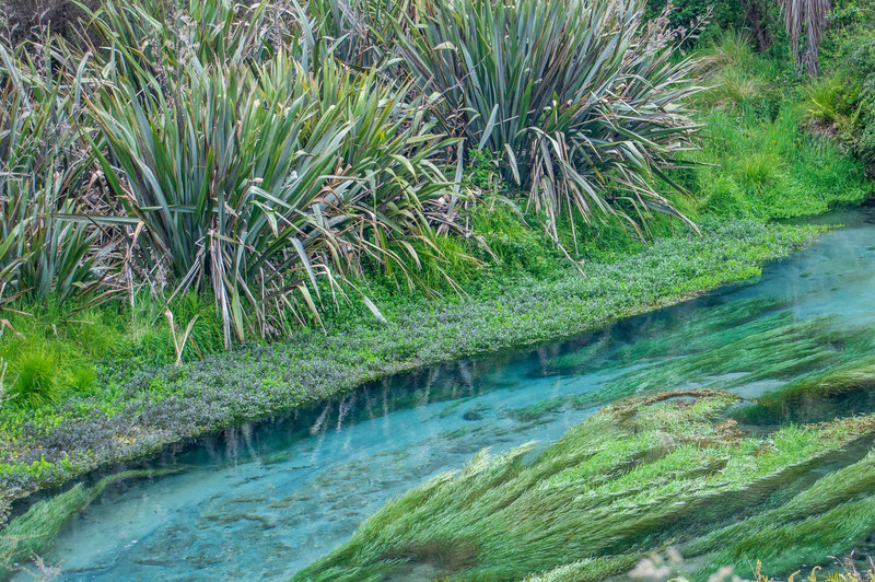 The blue waters of the Waihou River.