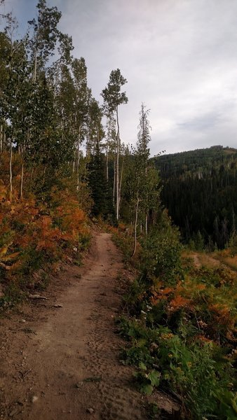 The trail just above the Pony Express lift.