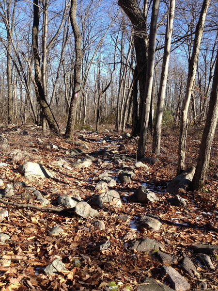 Don't let the jumble of rocks discourage you at the beginning of Middle Ridge.