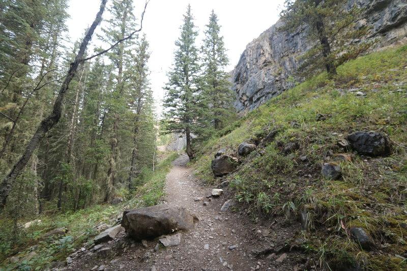 Prairie Creek Trail - Kananaskis.