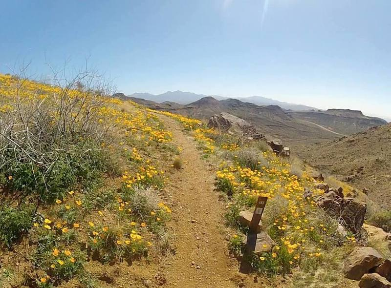 2.5-mile marker on the climb up Badger Trail. Flowers in February!