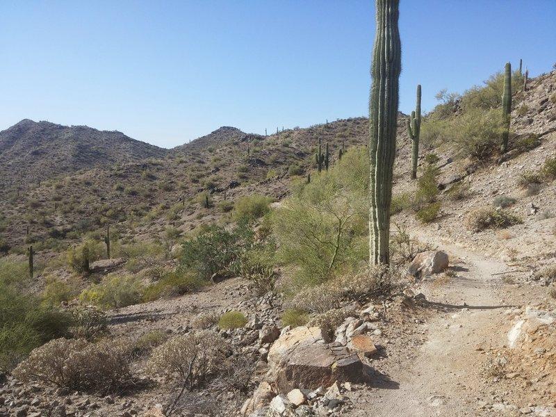 Rainbow Valley Trail
